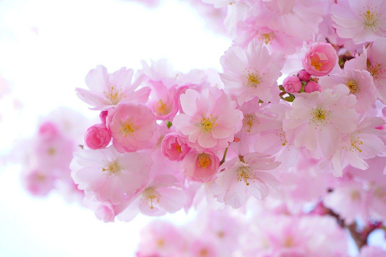 You are currently viewing Comment trouver un fleuriste pour la décoration de son mariage?